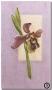8/1-Orquidia